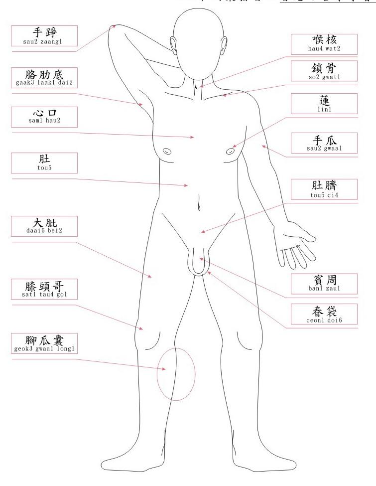 身體各部分粵語稱呼(圖解)